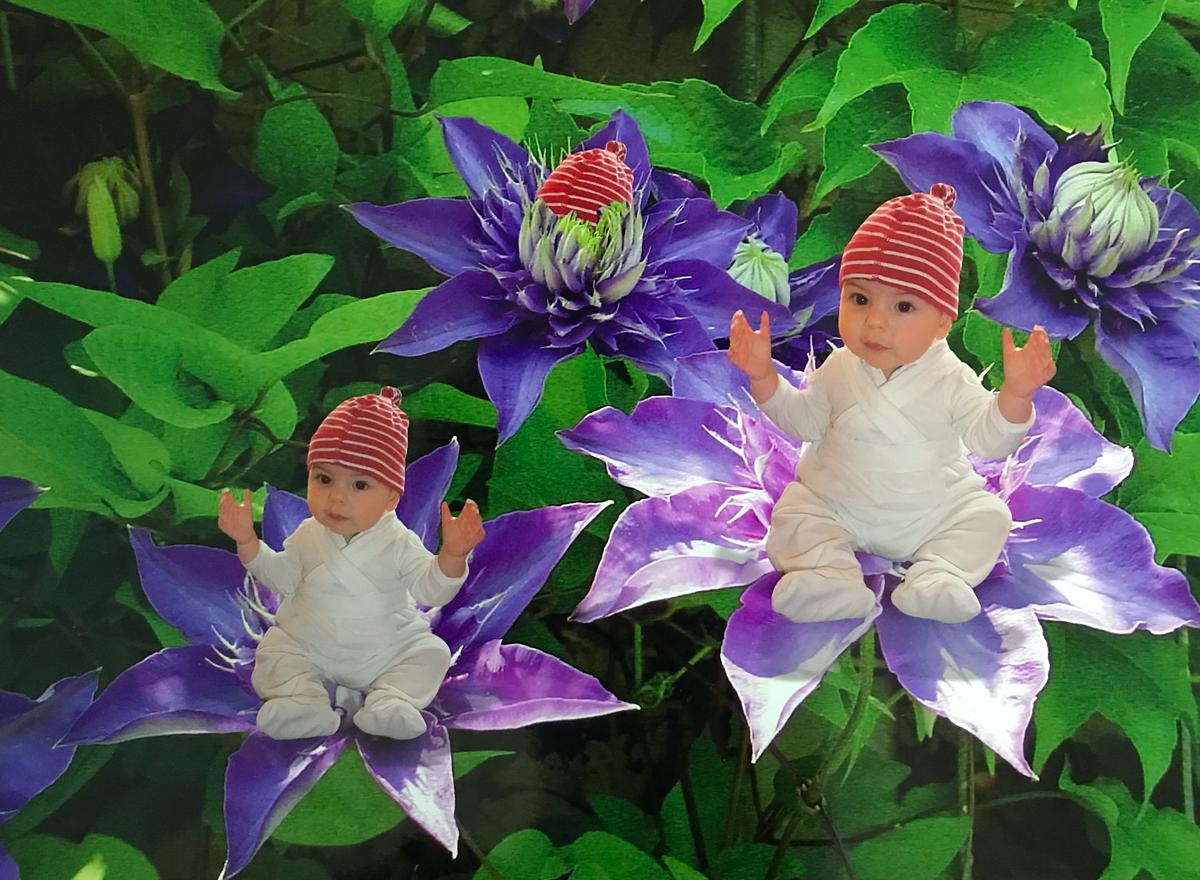 Elisabeth Schweighofer Babyfotografie Blumenkind Blumenkinder